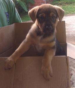 puppydaycare